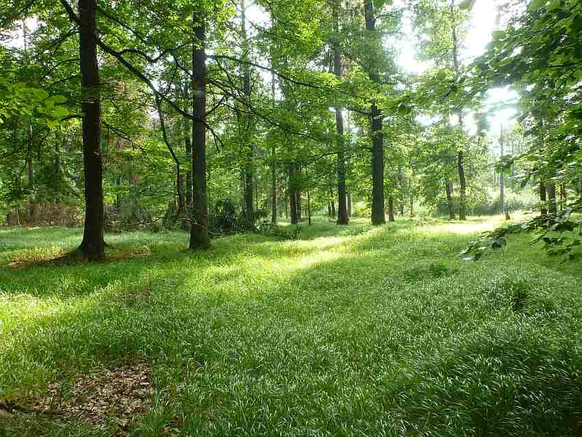 Zdj.9 Teren Liścia koło Książa inny las. Autor