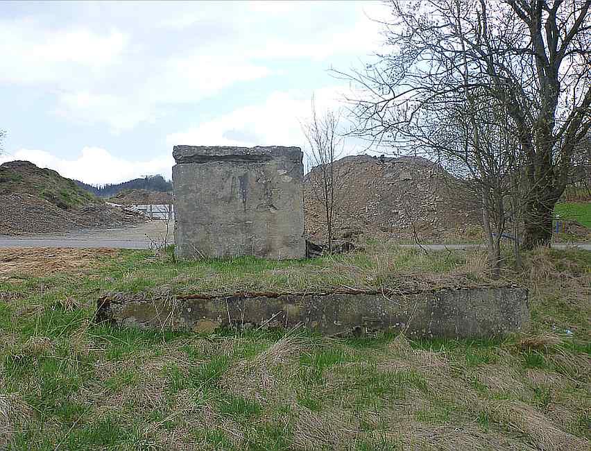 Fot 1. Głuszyca bunkierek radiolinia tył Zdj. Tomasz Jurek